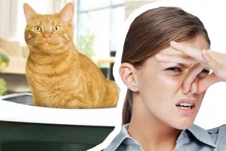 Запах мочи домашних животных в Смоленске