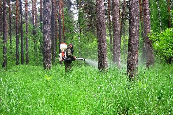 Обработка от клещей лесных массивов в Смоленске
